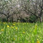 Meadow 700